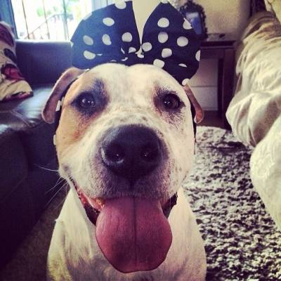 Must Love Dogs! Dog Lovers and Online Dating